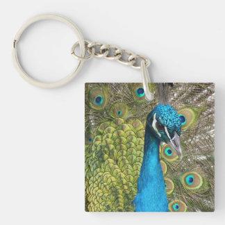 Pájaro del pavo real con las plumas hermosas llavero cuadrado acrílico a una cara