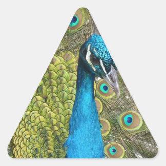 Pájaro del pavo real con las plumas hermosas pegatina triangular