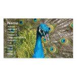 Pájaro del pavo real con las plumas hermosas tarjeta de visita