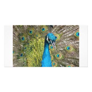 Pájaro del pavo real con las plumas hermosas tarjeta personal