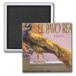 Pájaro del pavo real del Pavo del EL del arte de Imán Cuadrado
