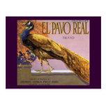 Pájaro del pavo real del Pavo del EL del arte de Tarjeta Postal