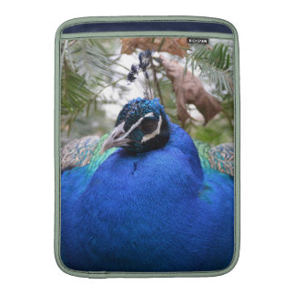 Pájaro del Peafowl azul Fundas Para Macbook Air