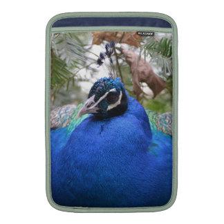 Pájaro del Peafowl azul Funda Macbook Air