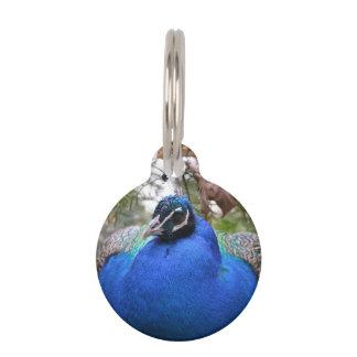 Pájaro del Peafowl azul Placa Para Mascotas