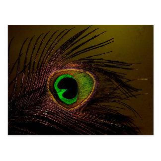 Pájaro del Peafowl del pavo real Postales