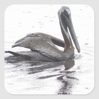 Pájaro del pelícano en la lluvia pegatinas cuadradas