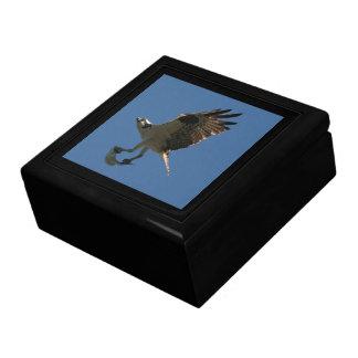 Pájaro del rapaz de Osprey y caja de regalo de los