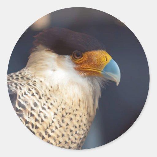 pájaro del rapaz etiqueta redonda