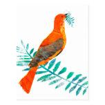 Pájaro del rojo de la paz tarjetas postales
