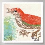 Pájaro del rojo de Papel del cisne Posters
