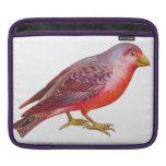 Pájaro del rojo del vintage fundas para iPads