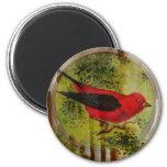 Pájaro del rojo del vintage iman