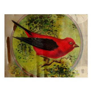 Pájaro del rojo del vintage postales