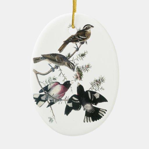 Pájaro del Rosa-breasted de James Aubudon Adorno Ovalado De Cerámica