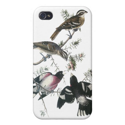 Pájaro del Rosa-breasted de James Aubudon iPhone 4/4S Funda