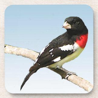 Pájaro del Rosa-Breasted Posavasos