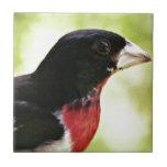 Pájaro del Rosa-Breasted Teja