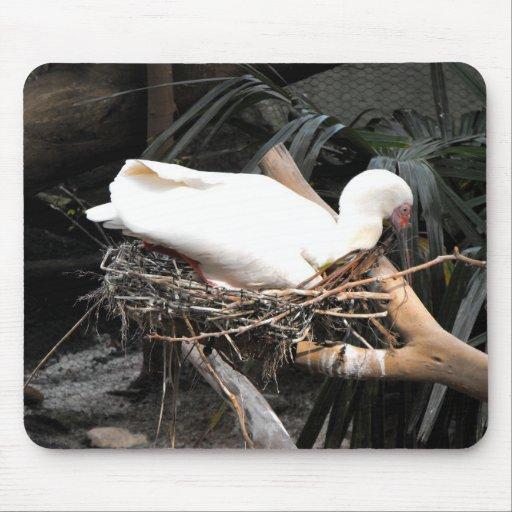 Pájaro del Spoonbill en jerarquía en España Alfombrilla De Ratones