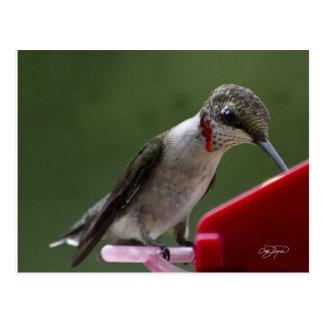 Pájaro del tarareo en Georgia Postal