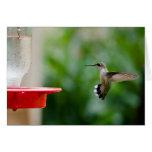 Pájaro del tarareo felicitaciones