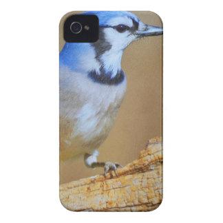 Pájaro del tarareo iPhone 4 Case-Mate carcasa