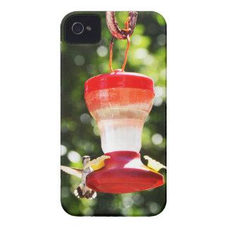Pájaro del tarareo iPhone 4 protectores