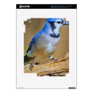 Pájaro del tarareo pegatina skin para iPad 3