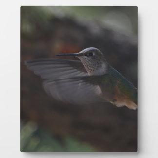 Pájaro del tarareo placas con fotos