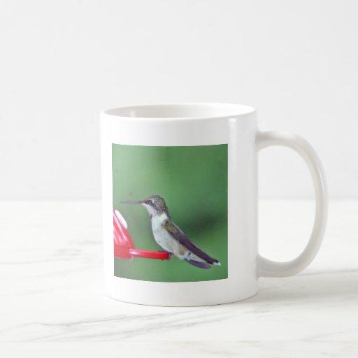 pájaro del tarareo taza