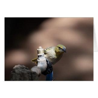 Pájaro del tejedor en un golpecito tarjeta de felicitación