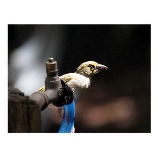 Pájaro del tejedor tarjeta postal
