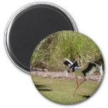 Pájaro del Territorio del Norte de Jabau Imán De Frigorífico
