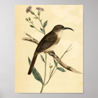 Pájaro del tordo del vintage póster