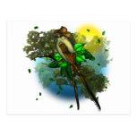 Pájaro del vaquero tarjetas postales
