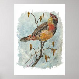 Pájaro del vintage posters
