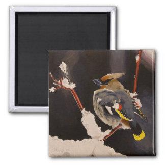 Pájaro del Waxwing bohemio Imán Cuadrado