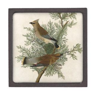 Pájaro del Waxwing de cedro de Audubon Cajas De Joyas De Calidad