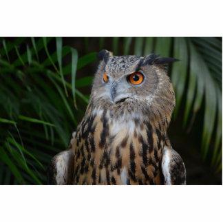 pájaro derecho sorprendido búho escultura fotografica