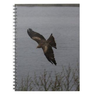 Pájaro despredador grande sobre el agua