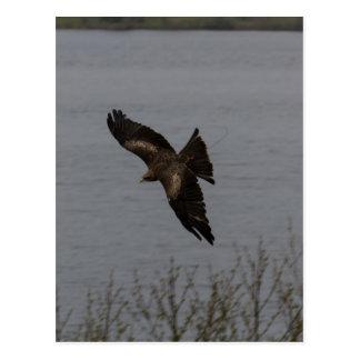 Pájaro despredador grande sobre el agua tarjeta postal
