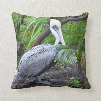 pájaro detrás pelcian copyright.jpg de la planta almohada
