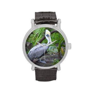 pájaro detrás pelcian copyright jpg de la planta relojes