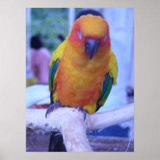 Pájaro el dormir en Balwarte, Ilocos, Filipinas Póster