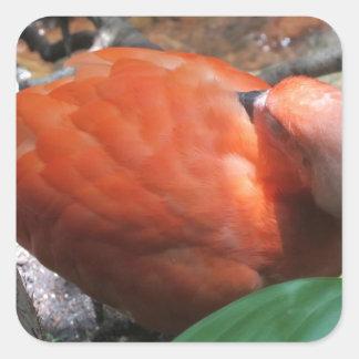 Pájaro el dormir pegatina cuadrada