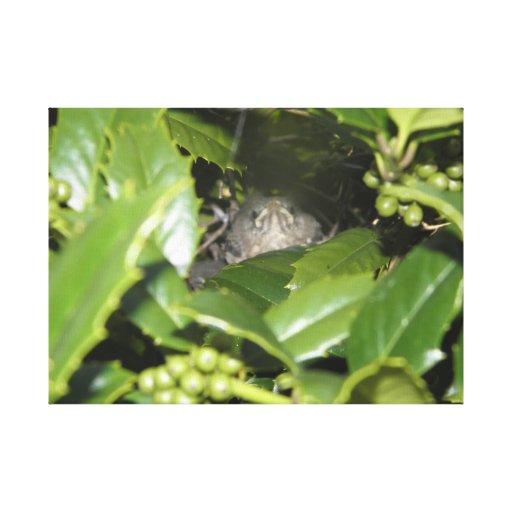 Pájaro en Bush Impresión De Lienzo