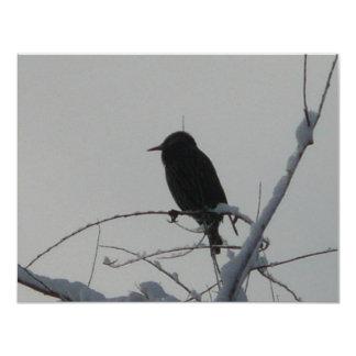 pájaro en día frío anuncio personalizado