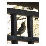Pájaro en Edimburgo, Escocia Membrete Personalizado