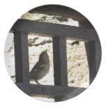 Pájaro en Edimburgo, Escocia Platos De Comidas