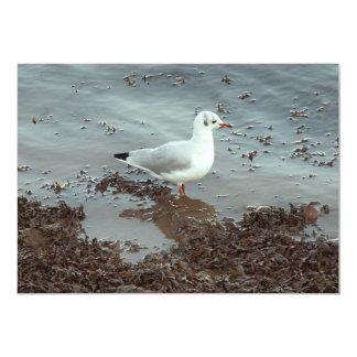 Pájaro en el borde del agua. Gaviota de cabeza Anuncio